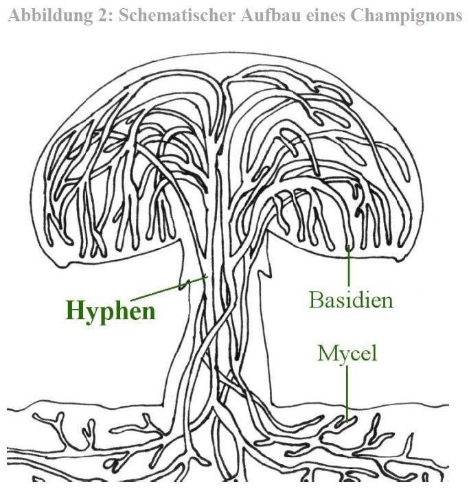 Anatomie und Morphologie – Eulenhof GbR